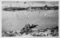 Excursion Boat at the Gull Colony Negit Island Mono Lake, Calif.
