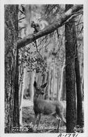 Wildlife of the Arizona Forests