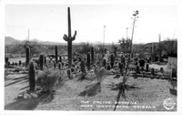 The Cactus Gardens near Wickenberg, Arizona