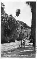 Palm Canyon, Palm Springs, California