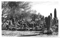 Cactus Gardens, Wickenburg, Arizona