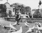 Girl feeding birds at the San Juan Capistrano Mission on the corner of Ortega Highway & Camino Capistrano