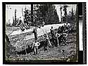 In the Redwoods, Blue Lake [Workers pose with a fallen log]
