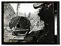 Among the California Redwoods. New Way, 24 Logs to Load, Reg No.7/Excelsior Redwood Co [Logging in Excelsior Redwood Co. woods/unknown]