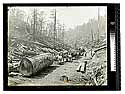 Among the Redwoods in California [Logging by Horse team #2/unknown]