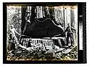 [Under cut - Vance woods logging/unknown]