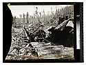 Excelsior Redwood CoEureka Cal. 10 ft. Dia [Logging by Bull Donkey/unknown]