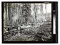 [Excelsior Redwood Co. logging - Freshwater #3/unknown]