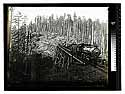 Among the Humboldt Redwoods [Train of logs - Luffenholtz trestle/unknown
