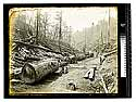 [Redwood Logging (skid road)/unknown]