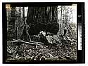 [Undercut - redwood/unknown]
