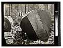 [Large redwood undercuts/unknown/Large redwood logs]