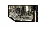 [Ericson Children? In the redwoods/unknown/Three of A.W. Ericson's children and Richard Ericson]