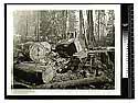 John Vance [?], 13 ft in diameter [Men posing atop sections of redwood logs]