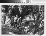 [Children playing beneath trees at a wilderness park photograph].