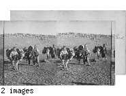 Donkeys Loaded with Water Jars on a Desert Road. Bibical Asia Minor.
