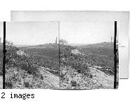 Gardens of Gethsemane - Roses of Sharon on fields North of Mt. of Olives. Jerusalem. Palestine.