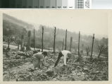 Berkeley fire, 1923, 3 of 9