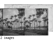 Egypt? The Nile? Date Palms.