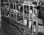 Women Working In Fig Packing Plan
