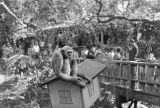 Jungleland Auction