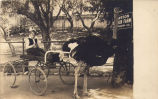 Cawston Ostrich Farm Postcard: Girl with Ostrich and Cart