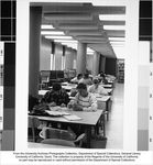 Shields Library, students studying