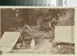 Postcard of Camping in the Redwoods, Alma, California