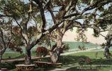 """Postcard: """"Oak Trees at Busch's Sunken Gardens, Pasadena, Calif."""""""