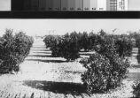 Trees & topsoil
