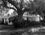 Centinela Adobe and Pepper Tree