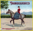 "Crate label, ""Thoroughbred."" West-American Fruit Co., California."