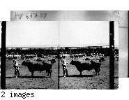 """The """"trustees"""" of the Great Cattle Show, Louisiana Purchase Exposition, St. Louis, Mo."""