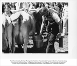 Picnic Day, Cow Milking, Chancellor James Meyer