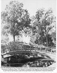 Arboretum, bridge over Putah Creek
