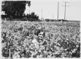 Photograph of Morse Company Flowers Sweet Pea Field