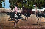 "Cawston Ostrich Farm Postcard: ""The Keeper's Morning Ride"""