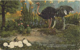 "Cawston Ostrich Farm Postcard: ""The Happy Family"""