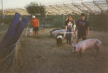 students tending hogs at school farm
