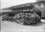 Photograph of Moss Landing Whaling Station With Stacked Whale Bone