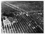 Photograph of Albert S. Bradford House amongst orange groves