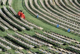 Slide of empty chairs before graduation ceremony
