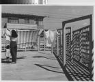 Photograph of a woman and small child hanging laundry at William Mead Homes