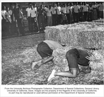 In the traditional Frosh-Soph Brawl held during the first month of classes, students compete in such events as a tug of war, an obstacle race, and a hay stacking contest. If the freshmen win, they are permitted to discard the freshman caps, known as dinks, otherwise, they must wear them until the Pajamarino Rally later in the fall