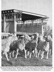 Crocker Nuclear Laboratory, sheep near