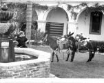 Blessing of the Animals traditional ceremony at Mission San Luis Rey in San Diego County, CA