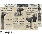 "Cawston Ostrich Farm Brochure: ""Cawston Ostrich Farm, South Pasadena, California, The Original Ostrich Farm of America"""