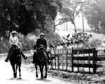 Moller cattle drive, (c. 1971), photograph # 1