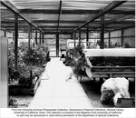 Greenhouse, Environmental Horticulture