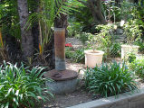 Smudgepot in garden